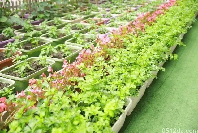 苏州金鹰穹顶农场7.17正式开放,免费认领你的一米果园!